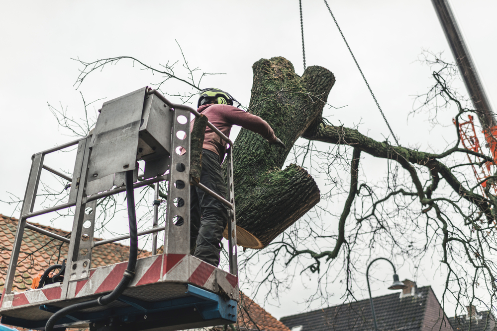 tree trimming millersville md
