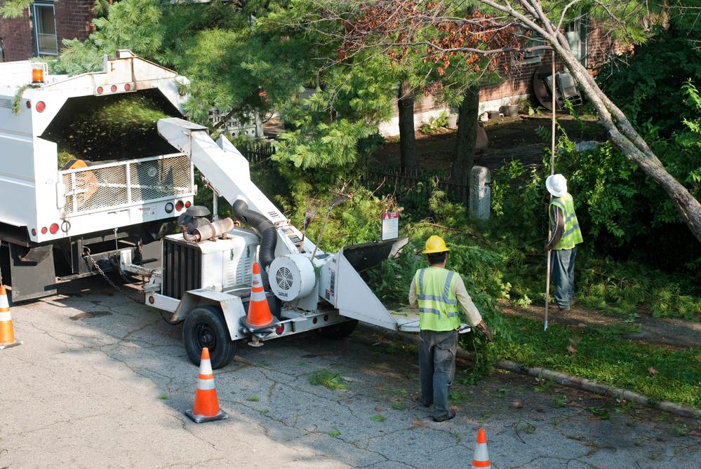 high risk tree removal Leonardtown