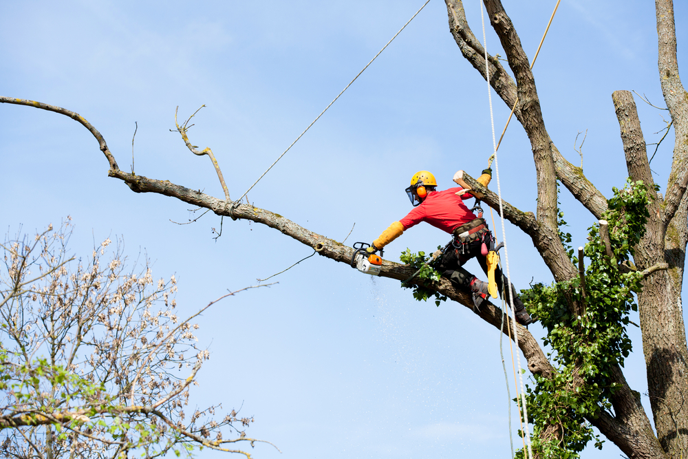 tree pruning lusby md