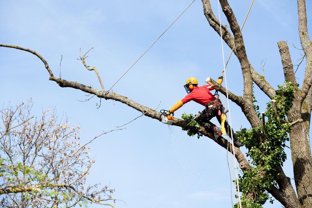 tree pruning severn md
