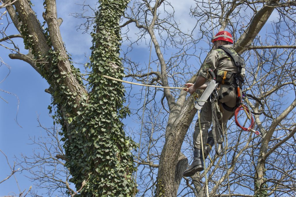 tree-trimming-and-pruning-davidsonville-md